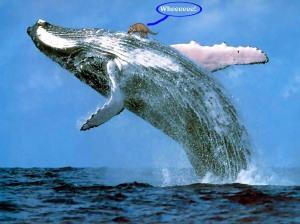 indohyus-whale.jpg?w=300&h=209
