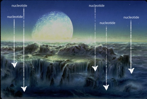 nucleotides-ocean