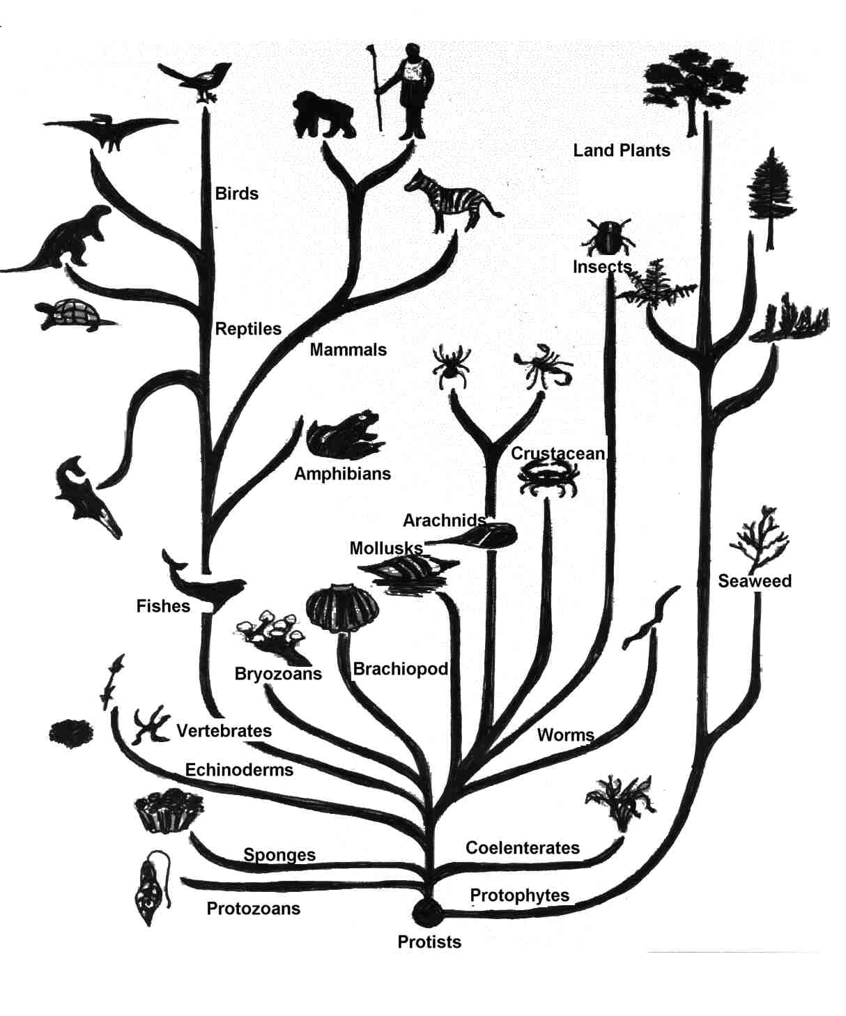 What Is The Evolutionary Relationship Between A B Openstudy