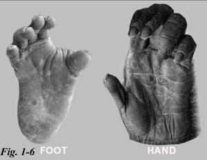 1-6 hands