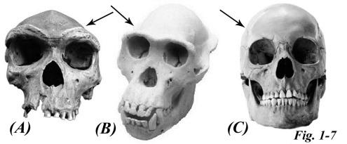 1-7 skull test_edited-2
