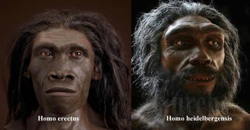 a heidelbergensis