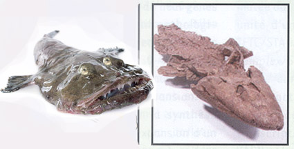 tiktaalik and monkfish